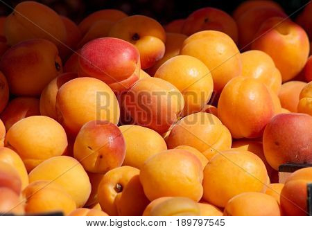 fresh apricots on the local farmer´s market