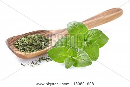 Oregano spices
