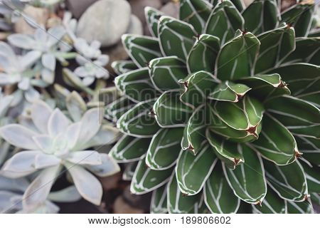 succulent plant with rock garden background toning