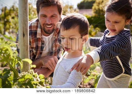 Father And Children Looking At Tomatoes Growing On Allotment