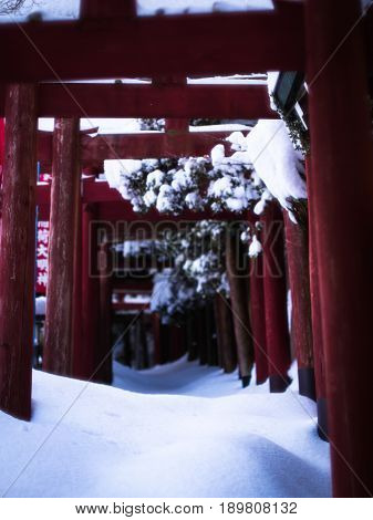 A tunnel of red, snow-covered, Japanese, Shinto, torii gates.