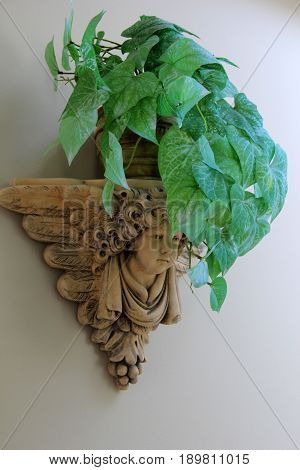 Vertical image of stone planter hanging on wall of home, with healthy green plants growing from base.