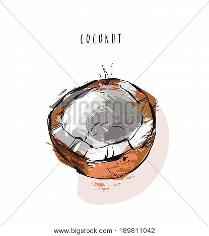 Hand drawn vector abstract exotic tropical fruit coconut illustration isolated on white background.Healthy lifestyle concept