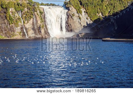 The concept of active and cultural tourism. Many water birds resting in water. The vast blue lake and powerful waterfall Montmorency in Montmorency Falls Park, in vicinities Quebec