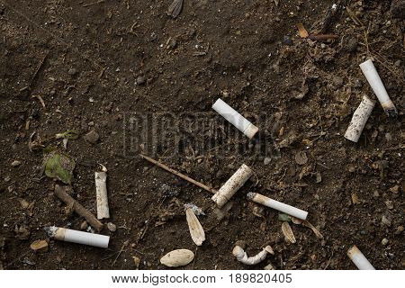 Top view on cigarette butts in the soil . Pollution smoking addiction.Many cigarette butts close-up
