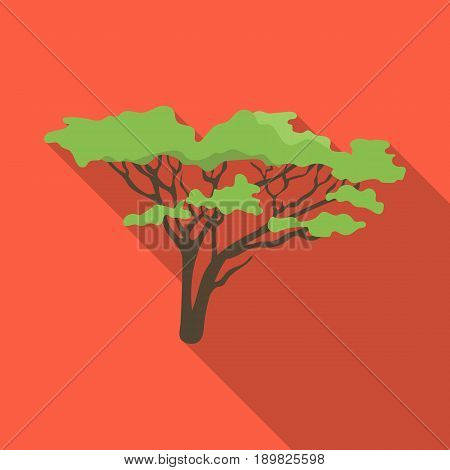 Tree in the savannah.African safari single icon in flat style vector symbol stock illustration .