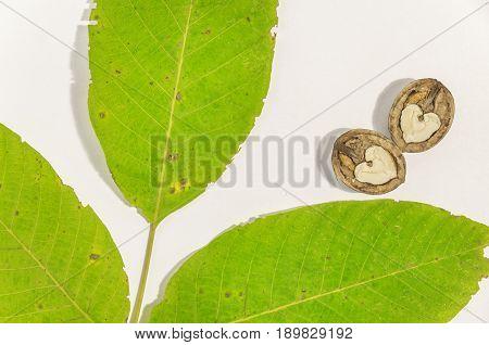 Green walnut leaf and cracked walnut on white