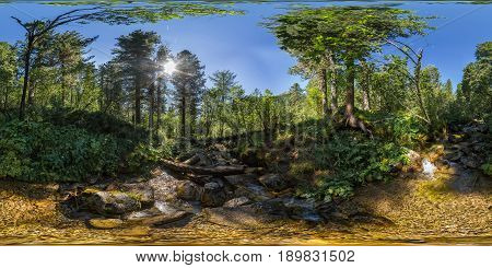Spherical Panorama 360 180 Creek In A Dense Green Forest