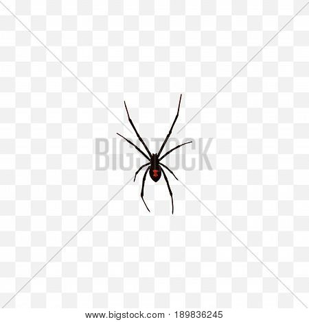 Realistic Spider Element. Vector Illustration Of Realistic Spinner Isolated On Clean Background. Can Be Used As Spider, Spinner And Arachnid Symbols.
