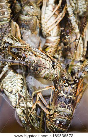 Close up of shellfish