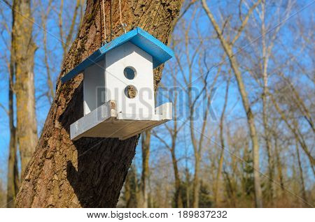 A white bird feeder with a blue roof hanging on a tree in the park. Caring for the brothers is our smaller concept. Spring came