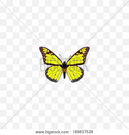 Realistic Yello-Wing Element. Vector Illustration Of Realistic Archippus Isolated On Clean Background. Can Be Used As Yellow, Butterfly And Monarch Symbols.