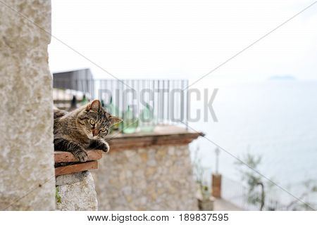 Beautiful grey cat on the cornice of a building