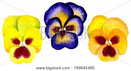 Wildflower viola flower in a watercolor style isolated. Full name of the plant:viola. Aquarelle wild flower for background, texture, wrapper pattern, frame or border.