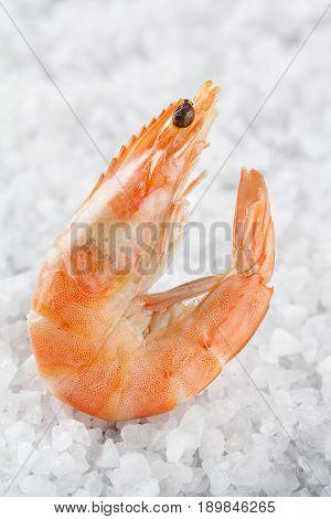 Shrimp On A Placer Of Sea Salt. One Raw Shrimp On A White Background. Macro.