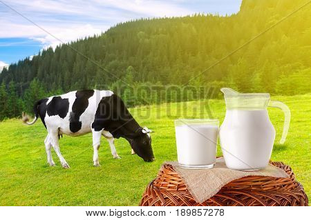 milk in jug and glass on wicker basket with cow on the meadow in the background. Glass of milk. Black and white cow grazing on meadow in mountains. Cattle on a mountain pasture. Summer landscape
