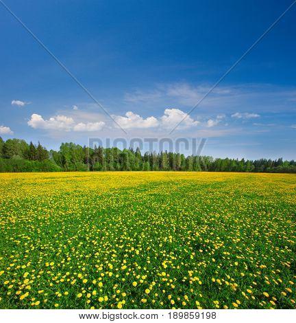 Yellow flowers field under blue cloudy sky