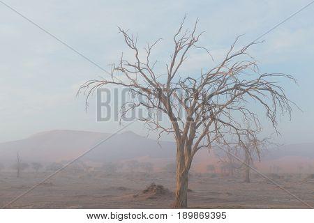 The Namib Desert, Roadtrip In The Wonderful Namib Naukluft National Park, Travel Destination In Nami