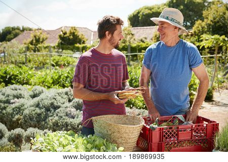 Father With Adult Son Working On Allotment Together