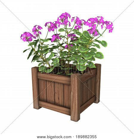 3D Rendering Geranium Planter On White