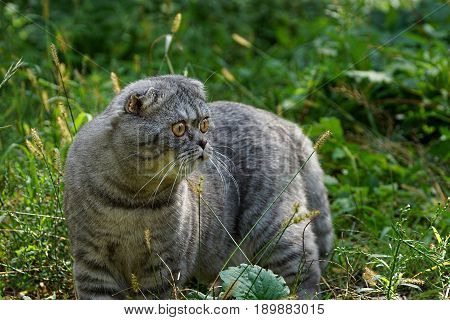 A gray cat stands among the grass and plants in the garden