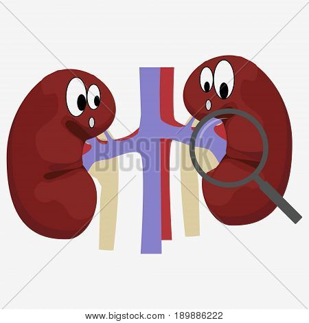 Human Kidney With Magnifying Glass