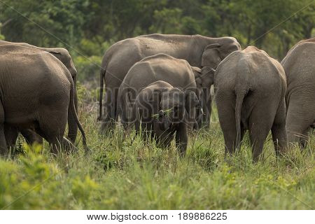 Group of Elephants in Jim Corbett Dhikala