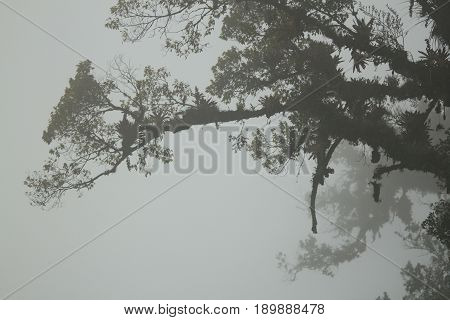 Fogbound Branches in the Cloud Forest of Boquete Panama