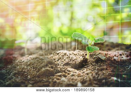 growing plant with stock market graph , concept for agricultural stocks have proved to be growing and stable in stocks market