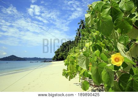 Tropical Beach of Coibita aka Rancheria with Isla Coiba in the Background. Coiba National Park Panama