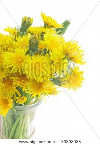 Bunch of Yellow fresh dandelions in vase close up isolated on white background