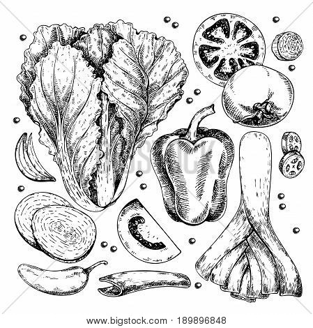 Vector hand drawn set of farm vegetables. Isolated chinese cabbage leek bell pepper tomato onion. Engraved art. Organic sketched objects. for restaurant menu grocery market store party meal