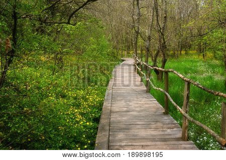 National Park Ropotamo Bulgaria. Wooden bridge leads to the Ropotamo river crossing green spring forest.