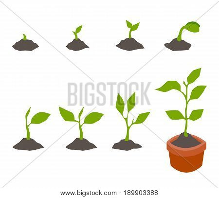 Infographic of planting tree. Seedling gardening plant. Plant seed germination process stages. Image for banners, web sites, designs. Vector symbols in a flat style isolated on a white background.