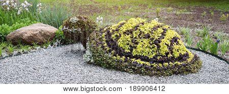 Turtle shaped bush in a topiary garden. Ornamental park garden design. Banner for website