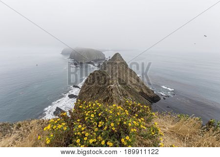 Anacapa Island foggy peaks and flowers at Channel Islands National Park in Southern California.