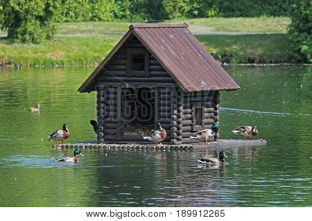 Duck house floating on the lake in the park