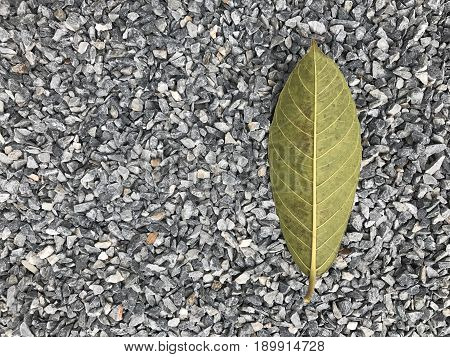 Granite gravel of macadam, Rock texture, background. Crushed grey stone and a leaf on a rock