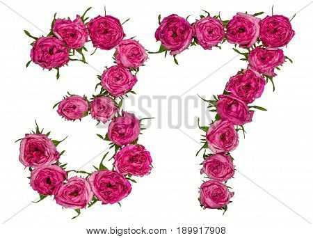 Arabic Numeral 37, Thirty Seven, From Red Flowers Of Rose, Isolated On White Background