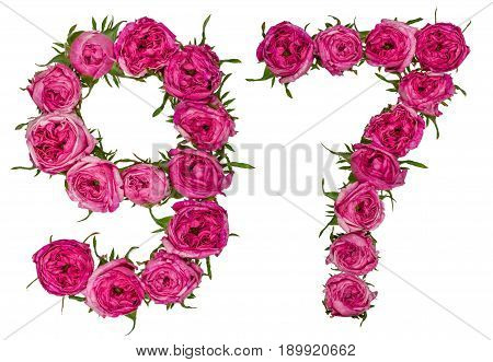 Arabic Numeral 97, Ninety Seven, From Red Flowers Of Rose, Isolated On White Background