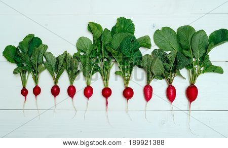 Row Of  Fresh Organic Red Radishes With Tops On White Wooden Background. Top View. Vegetable Backgro