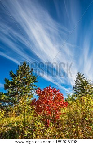 The concept of ecological tourism. Walk on the park in warm silent day. Cirrus clouds and autumn sun in Pinawa Provincial Heritage Park