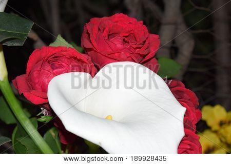 Las flores mas hermosas son las que florecen en la adversidad