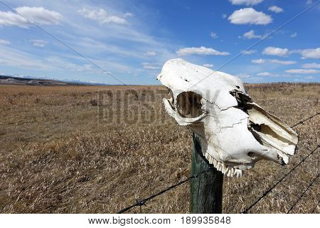 Picture of a cattle's skull found on a fencepost.