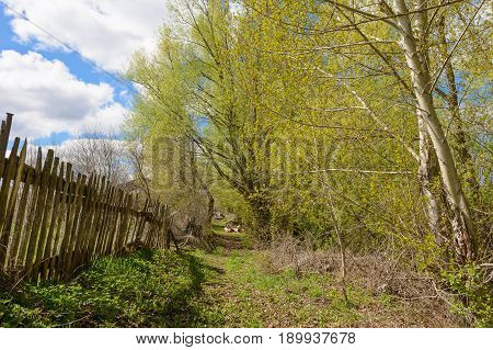 A path among the spring trees and the old fence
