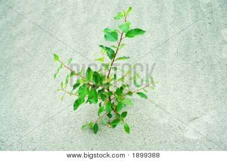 Plant In A Sands