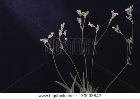 Pressed and dried flowers on black board background. For use in scrapbooking floristry or herbarium.