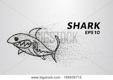 The Shark From The Particle. The Shark Consists Of Circles And Points. Vector Illustration.