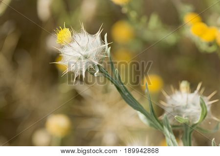 Macro Photography Of A Wild Plant In Spring.