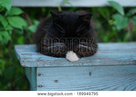 Black Fluffy Cat